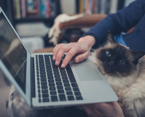 A young woman is using her laptop at home with a cat sitting on her lap